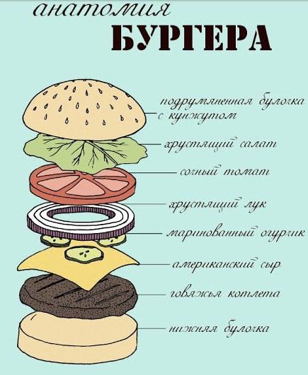 АНАТОМИЯ БУРГЕРА ФОТО