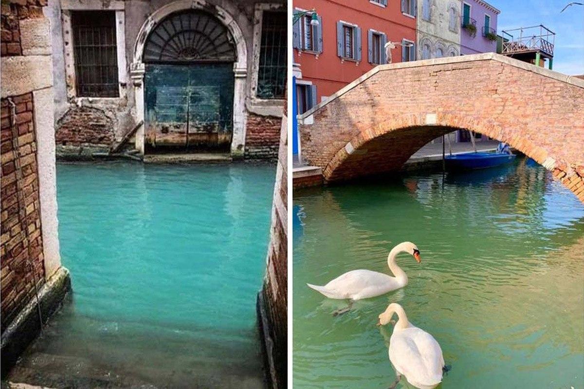 на улицах Венеции очистилась вода в каналах и даже стала прозрачной.