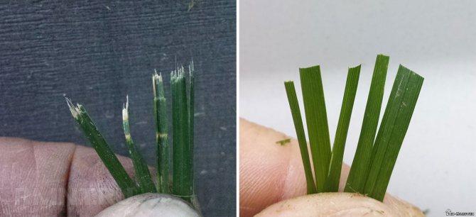 Как затачивать лезвия газонокосилки